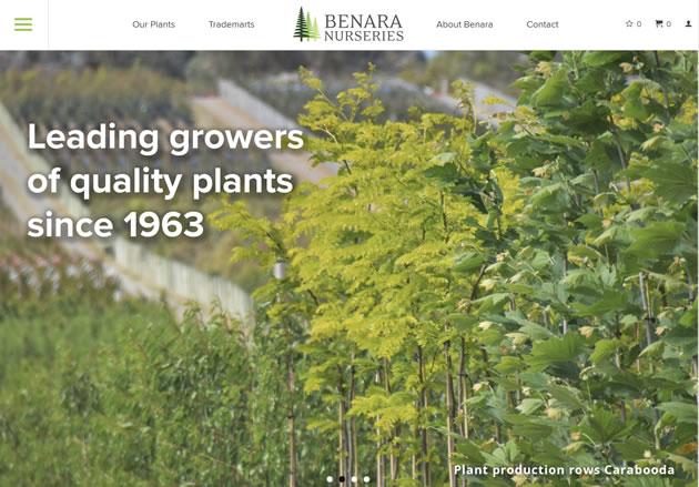 SEO Case Study on Benara Nursery