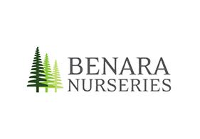Benara Nursery - Client SEO Case Studies